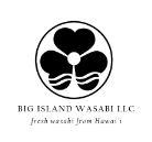 Big Island Wasabi